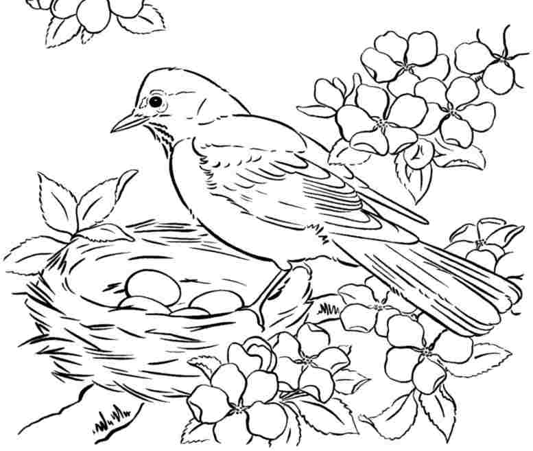 Robin Bird Drawing At Getdrawings Com
