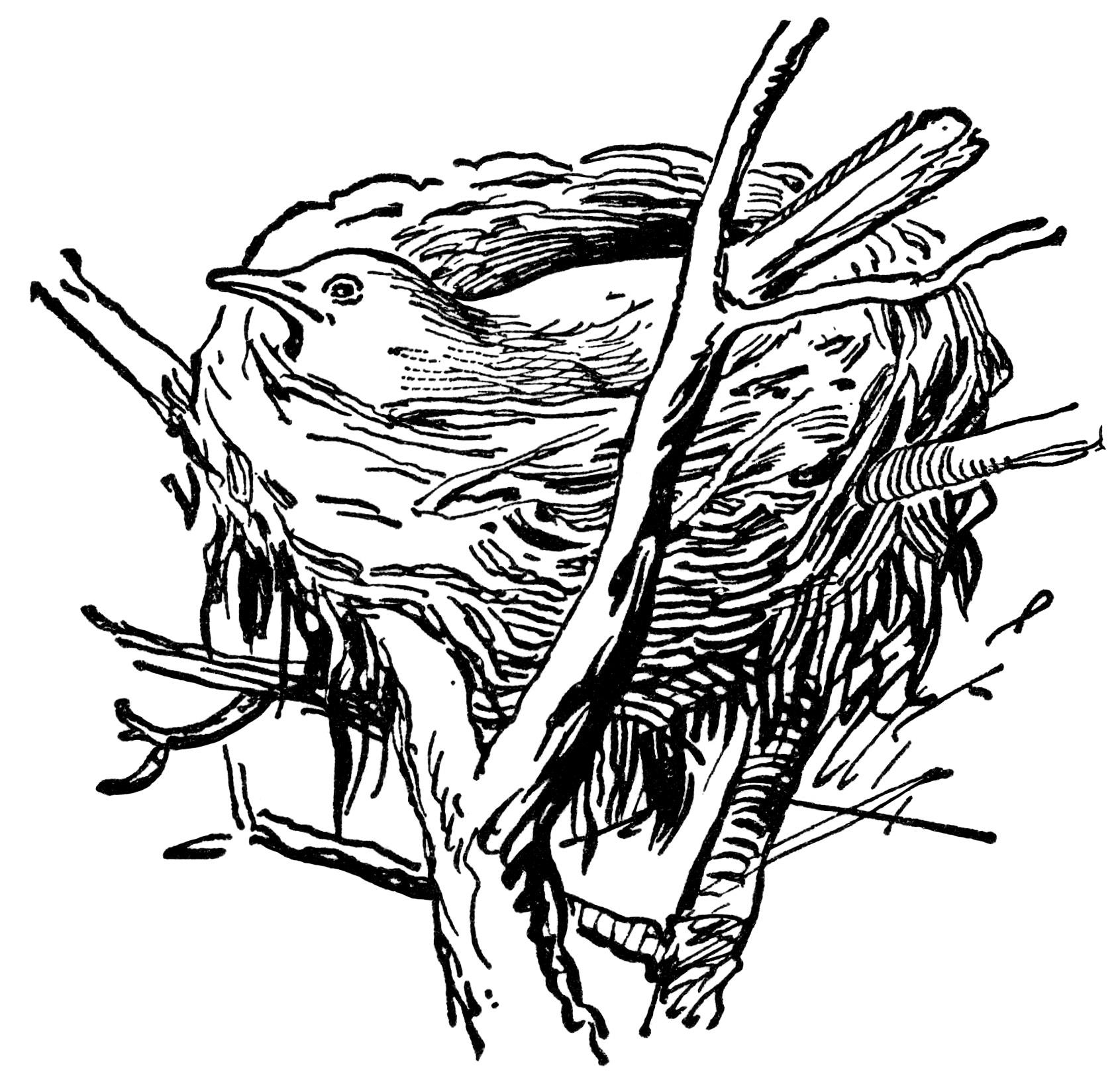 Dark Drawing Of Bird