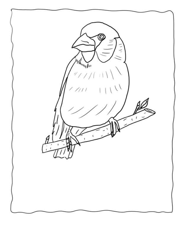 Atv Drawing At Getdrawings Com