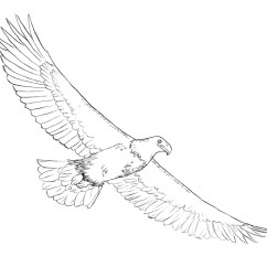 Eagle Wing Diagram 2002 Nissan Xterra Stereo Wiring Bird Wings Drawing At Getdrawings Free For Personal