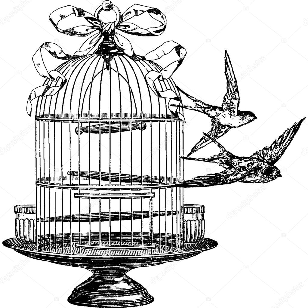 Birdcage Drawing At Getdrawings