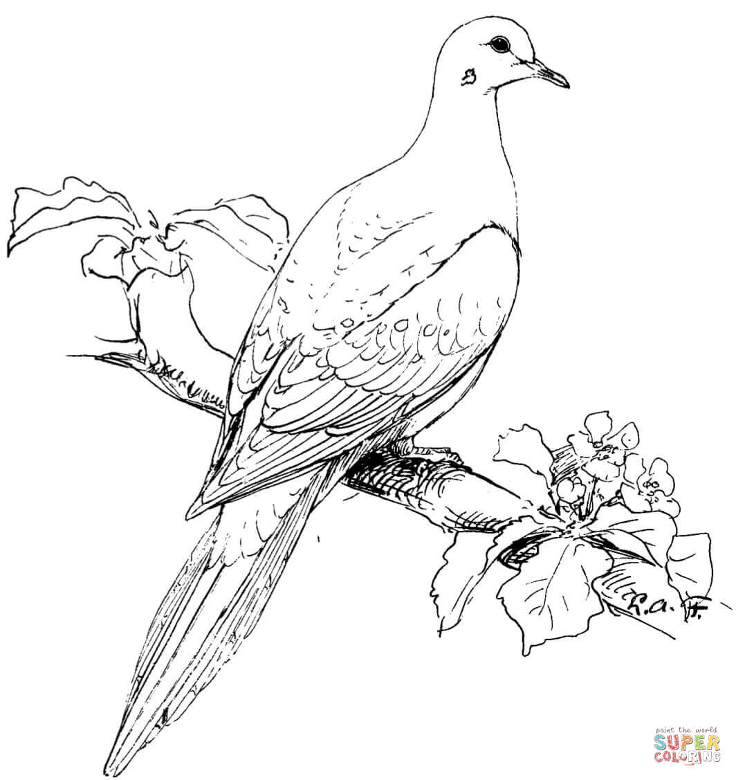Birds Drawing For Colouring At Getdrawings
