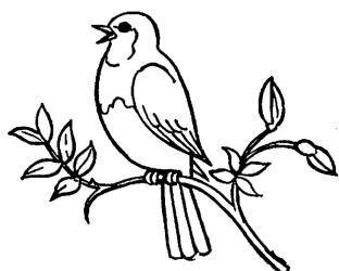 bird clipart drawing getdrawings
