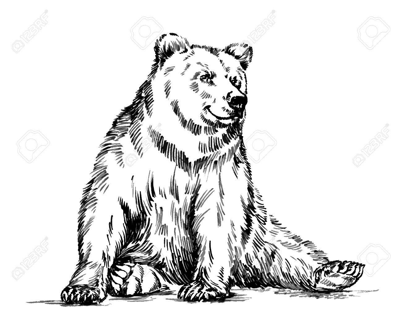 Black Bear Drawing At Getdrawings
