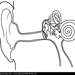Blank Ear Diagram Without Labels 05 Dodge Neon Radio Wiring Drawing Of Human Body At Getdrawings Com Free For Personal 580x520 Anatomy Coloring Sheet Page Kids