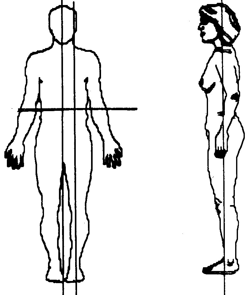 blank drawing of human body at getdrawings free for personal anatomy of