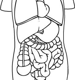 657x1267 how to draw anatomy step 7 science art human body [ 657 x 1267 Pixel ]