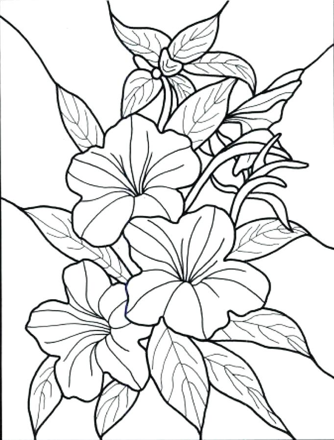 The best free Bluebonnet drawing images. Download from 155