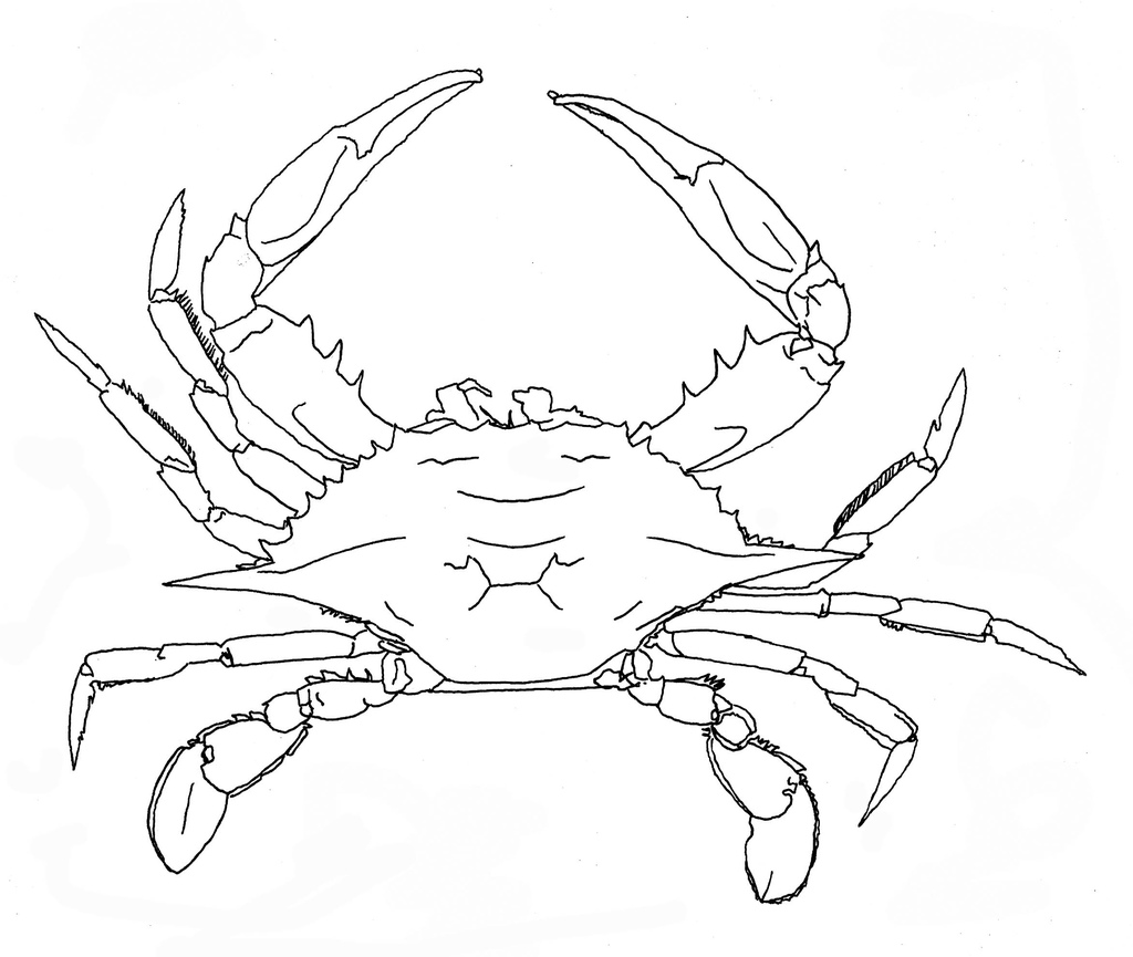 The best free Louisiana drawing images. Download from 118