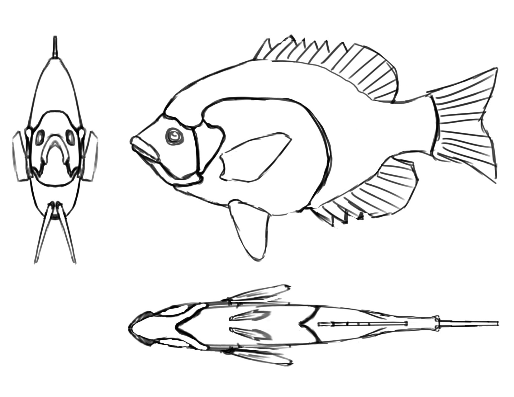 Bluegill Drawing At Getdrawings