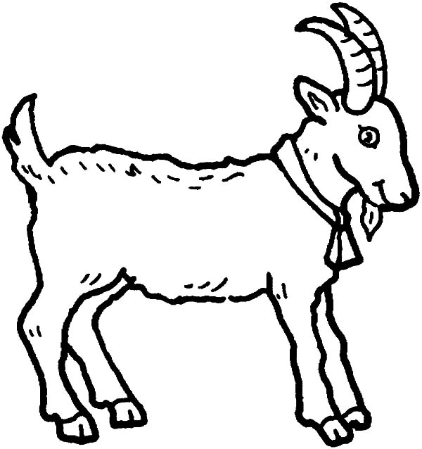 Boer Goat Drawing at GetDrawingscom Free for personal