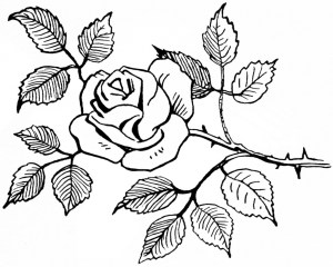 rose bouquet drawing roses flower simple flowers designs pencil bunch sketch drawings easy sketches getdrawings paintingvalley