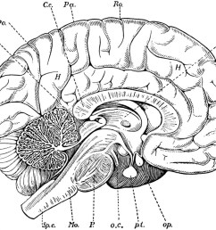 1280x1031 blank diagram of the inside of the brain blank brain diagram [ 1280 x 1031 Pixel ]