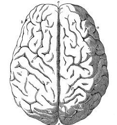 1000x1139 top brain clipart [ 1000 x 1139 Pixel ]