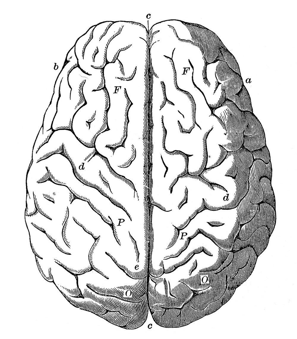medium resolution of 1000x1139 top brain clipart