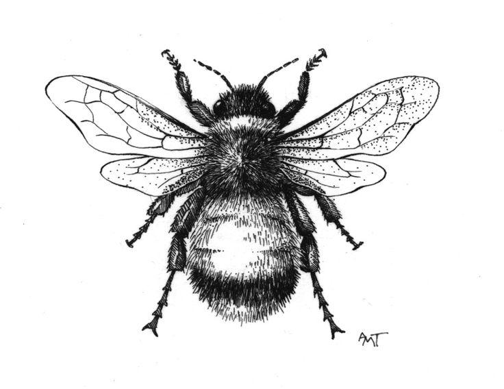 Queen Bee Drawing At Getdrawings Com