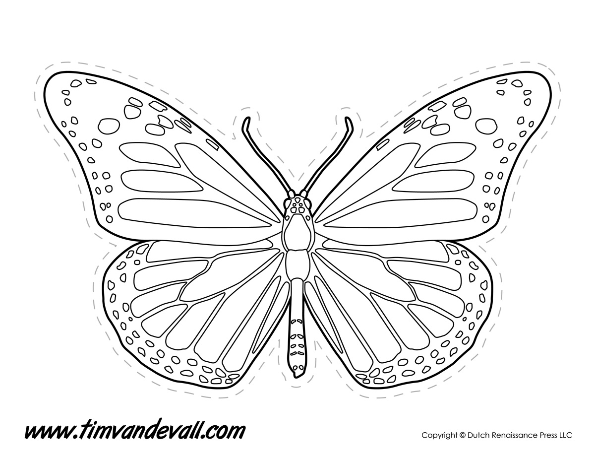 Butterfly Drawing Outline At Getdrawings