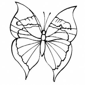 butterfly coloring pages drawing simple easy butterflies sheets printable flower animals rainforest disney colouring patterns getdrawings rose tropical designs animal