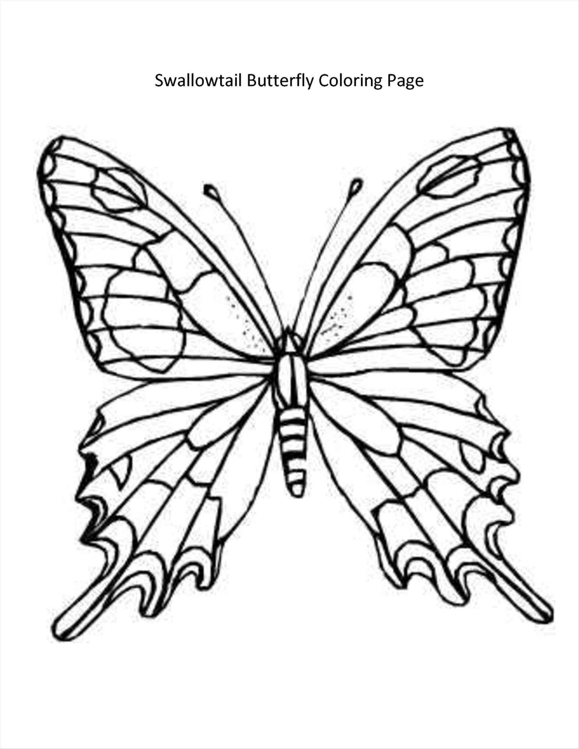 Butterfly Drawing Template At Getdrawings