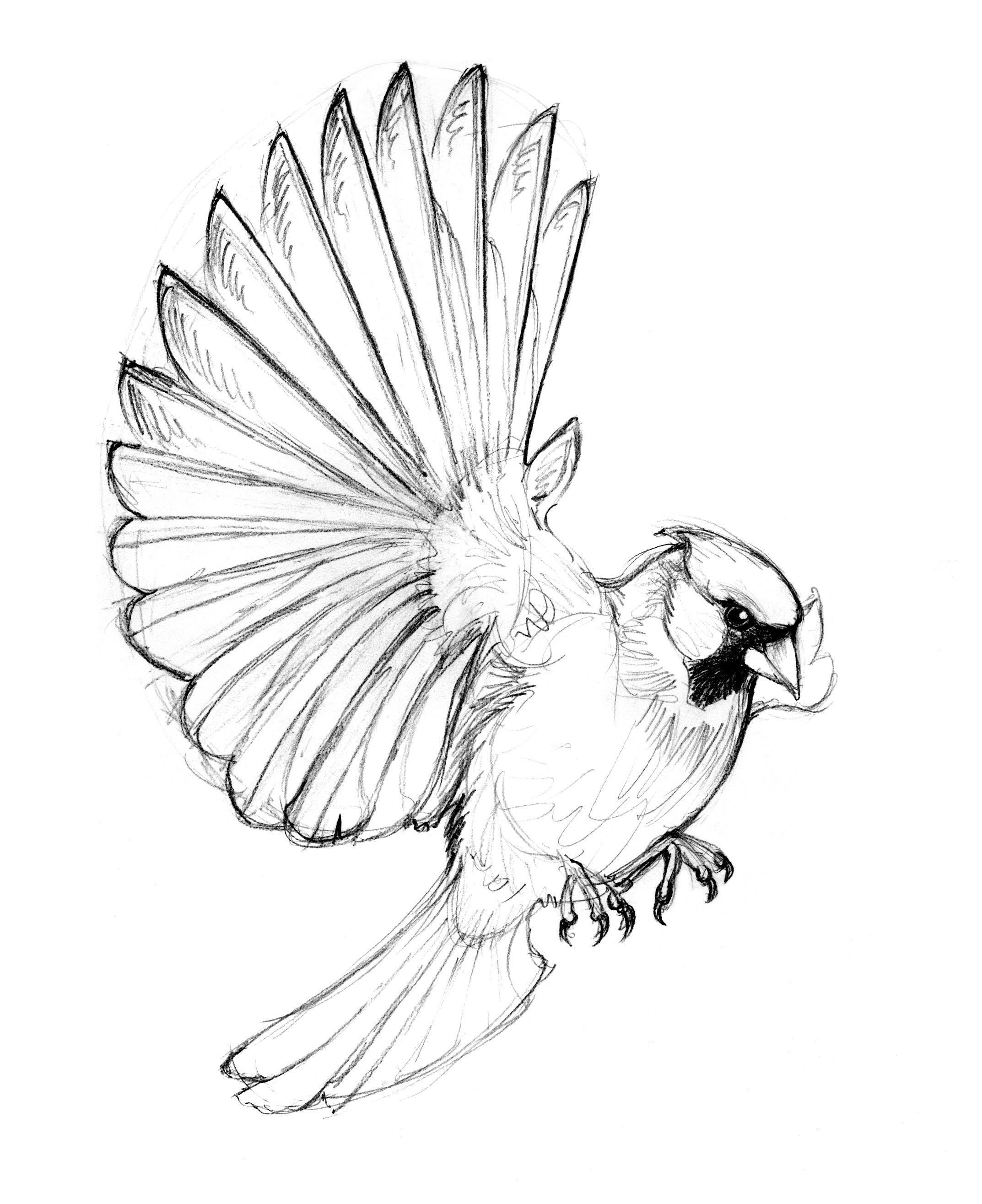 Cardinal Line Drawing At Getdrawings