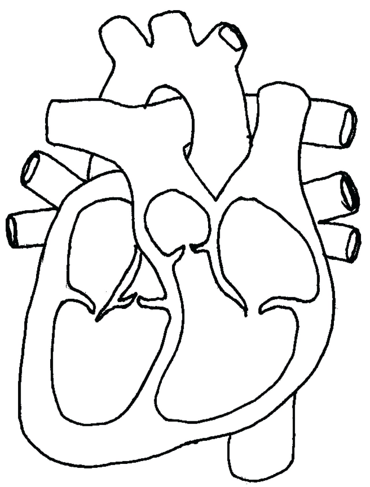 Cardiovascular System Drawing At Getdrawings