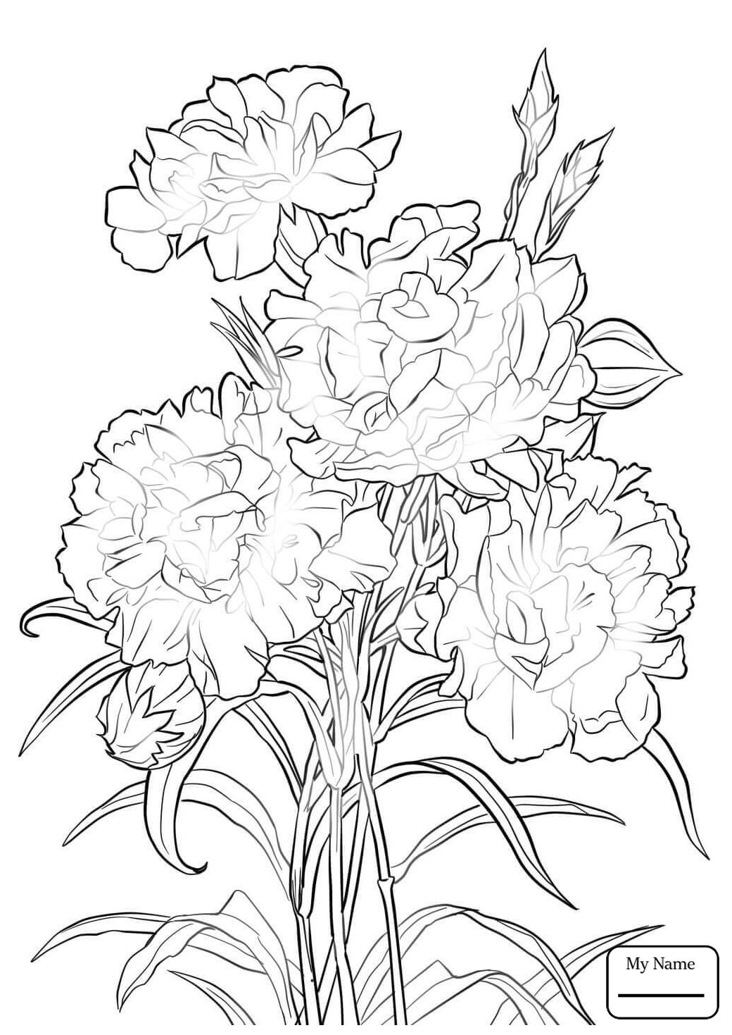 Carnation Flowers Drawing At Getdrawings