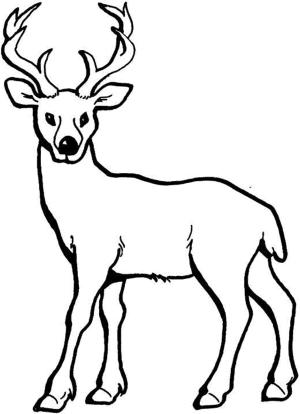 deer cartoon drawing realistic drawings coloring getdrawings