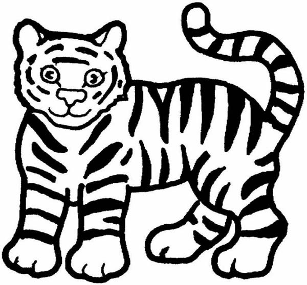 tiger cartoon coloring pages - white tiger cartoon drawing