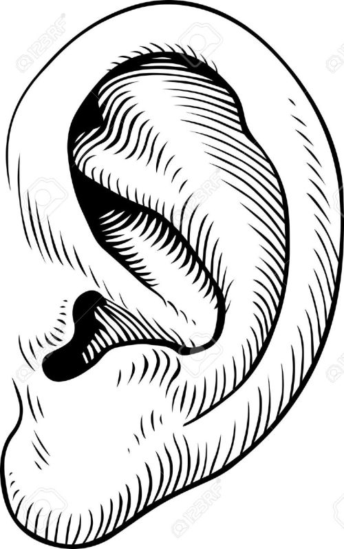 small resolution of 815x1300 cartoon ears clip art