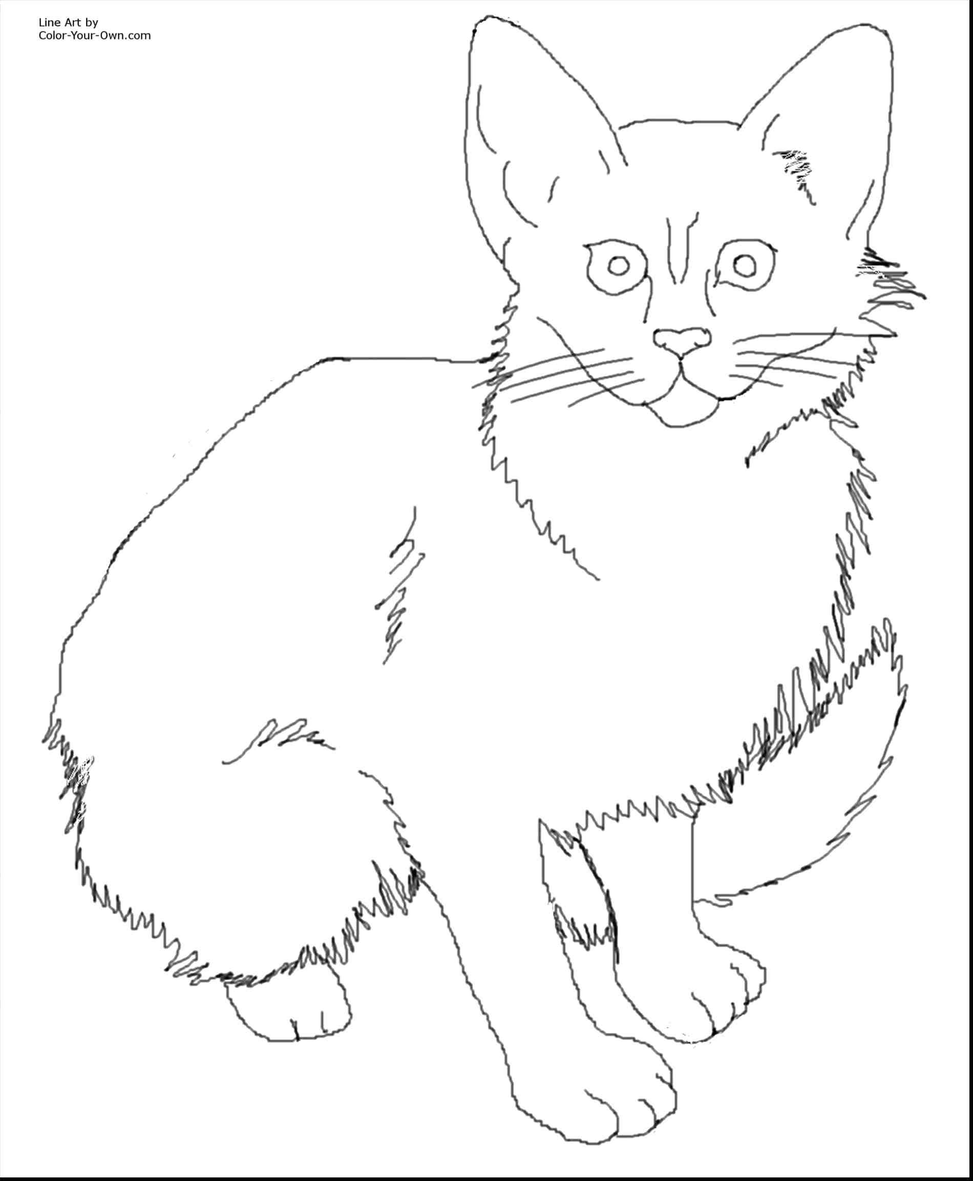 Baby British Shorthair Cat