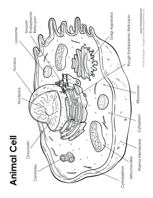 small resolution of 927x1200 diagram diagram cell labeled animal