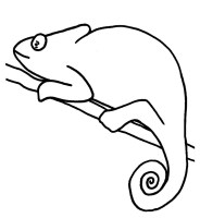 Chameleon Line Drawing at GetDrawings   Free download