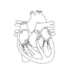 superior body diagram unlabeled schematic diagram [ 1024 x 977 Pixel ]