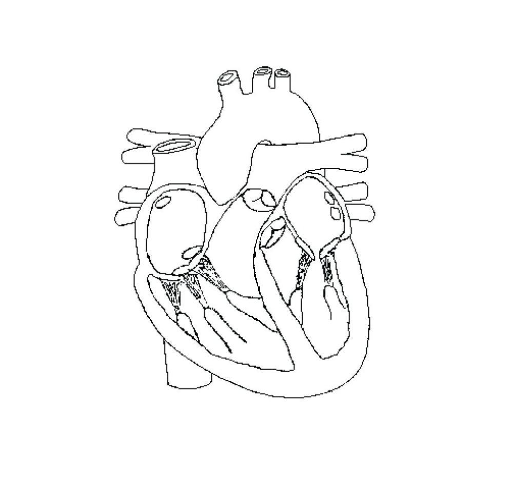 medium resolution of superior body diagram unlabeled schematic diagram