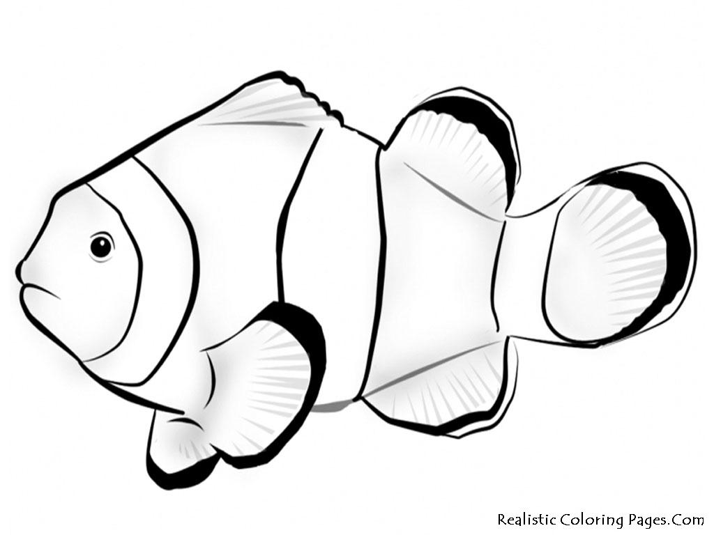 Clown Fish Drawing At Getdrawings