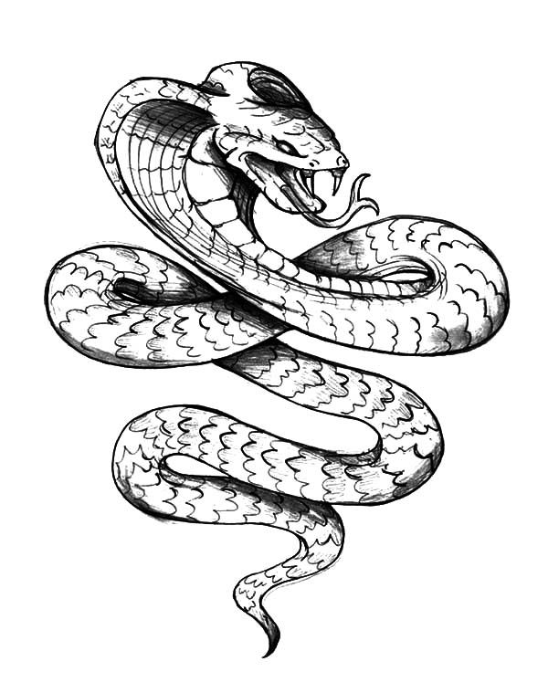 How To Draw A Cobra Best Cobra Snake Drawing At Getdrawings