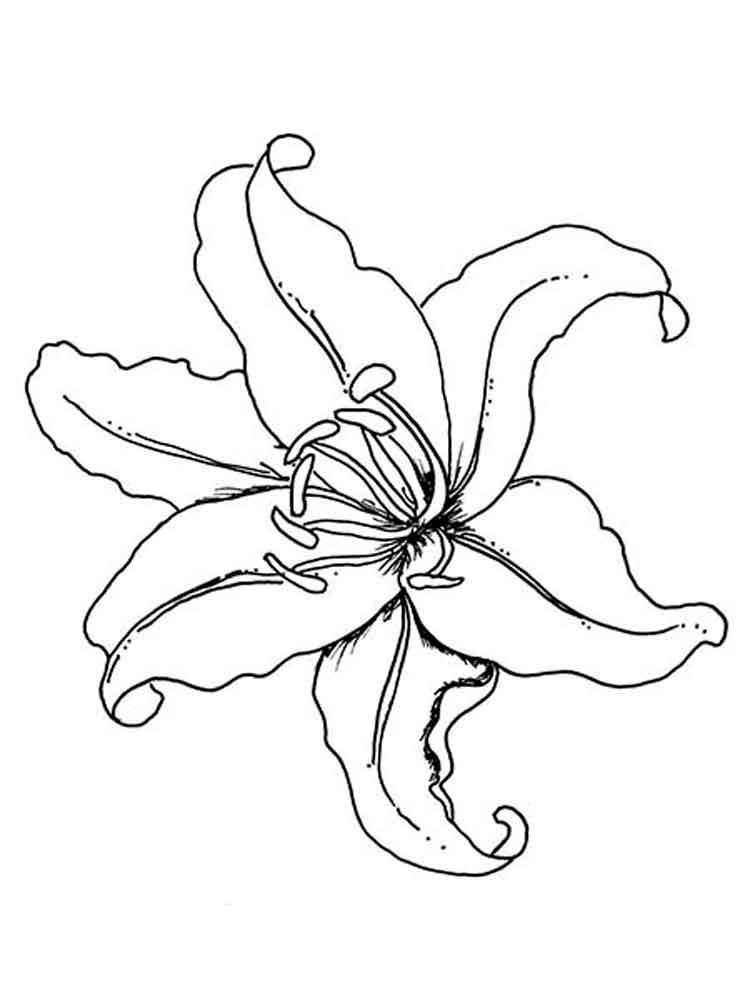Tropical Flowers Drawing At Getdrawings Com
