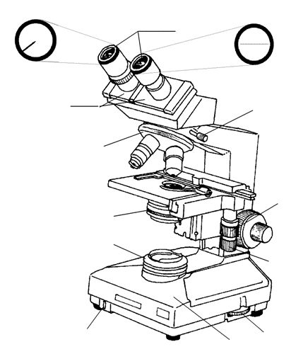Compound Light Microscope Drawing at GetDrawings.com