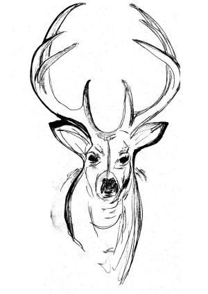 cool drawing draw things easy sketches beginners karate drawings fun nature getdrawings wildlife inspiration stag final major