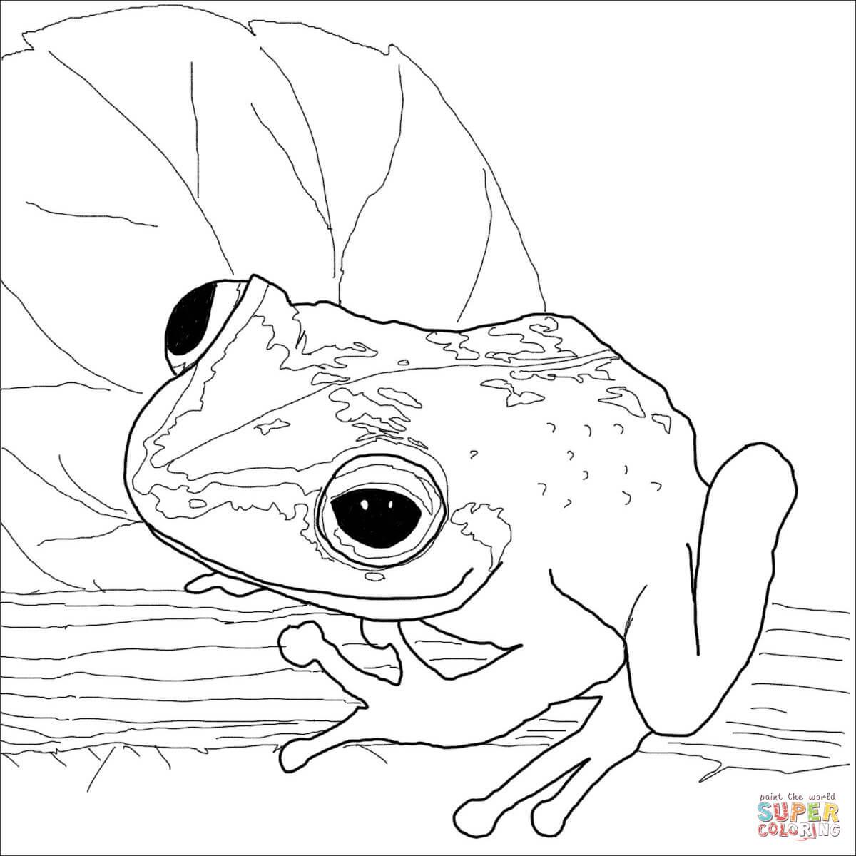 Coqui Drawing At Getdrawings