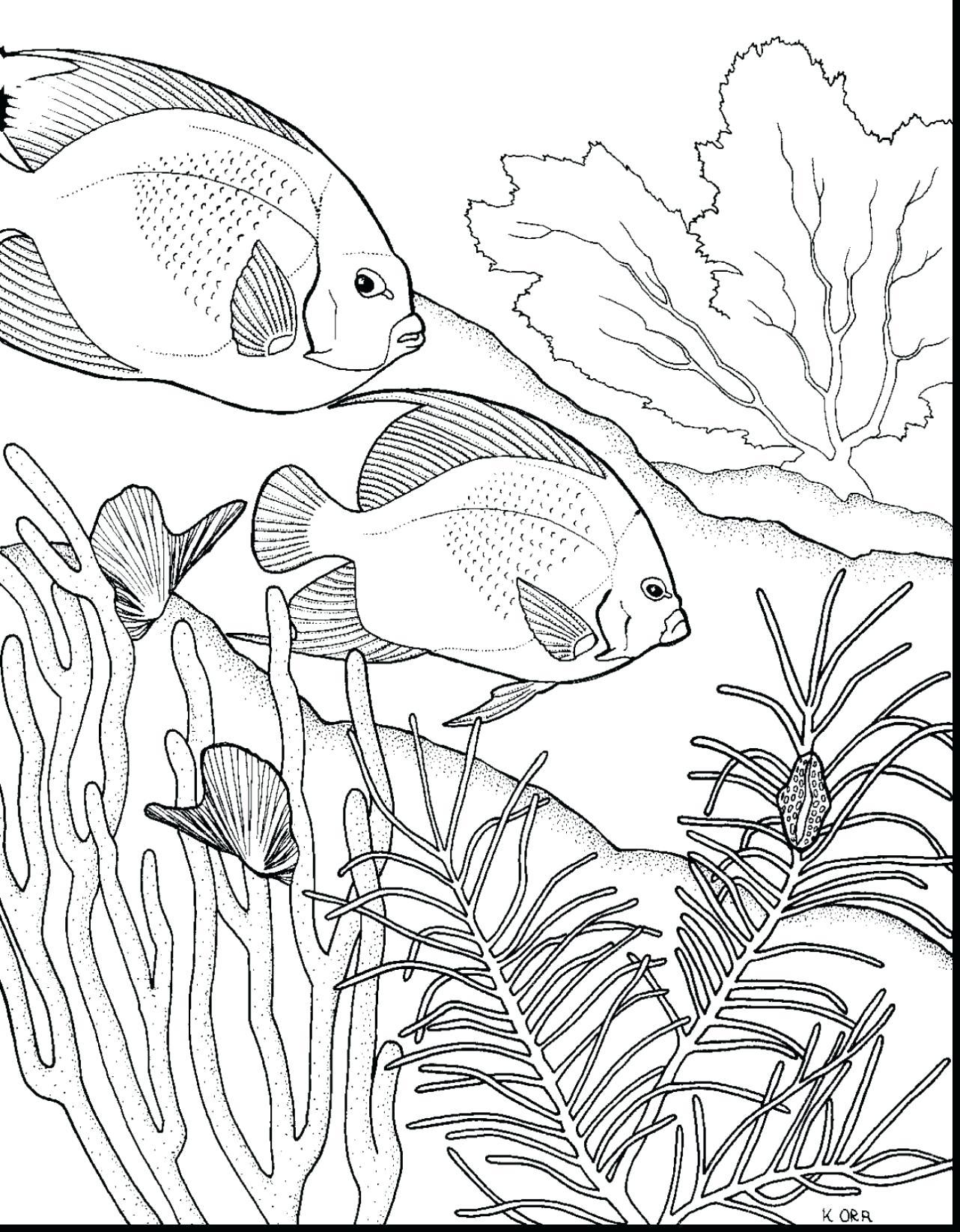 Coral Reef Drawing At Getdrawings