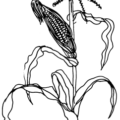 Corn Plant Diagram Bpt Door Entry Handset Wiring Drawing At Getdrawings Free For Personal