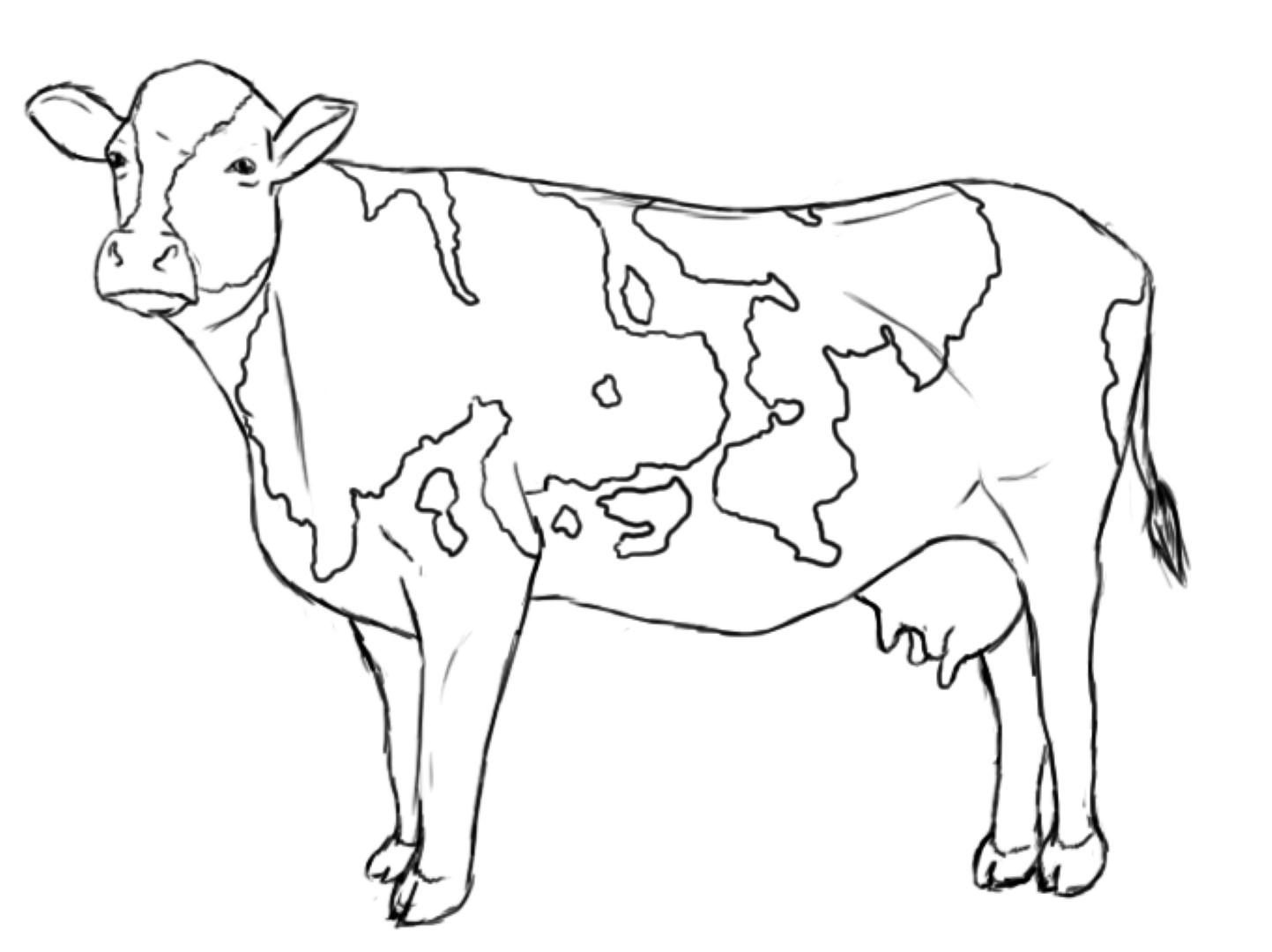 Cow Cartoon Drawing At Getdrawings