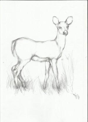 deer drawing drawings easy pencil animal getdrawings