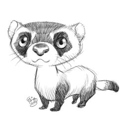 1200x1200 e j su on twitter sketch 0045 2017 0907 black footed ferret [ 1200 x 1200 Pixel ]