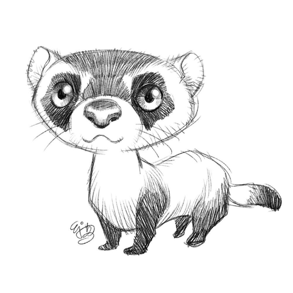 medium resolution of 1200x1200 e j su on twitter sketch 0045 2017 0907 black footed ferret