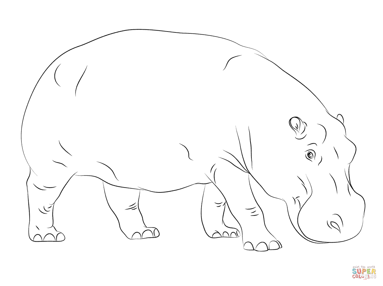 Cute Hippo Drawing At Getdrawings