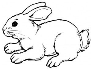 rabbit drawing coloring easy simple getdrawings