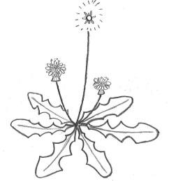 1145x1295 weeds poll awkward botany [ 1145 x 1295 Pixel ]