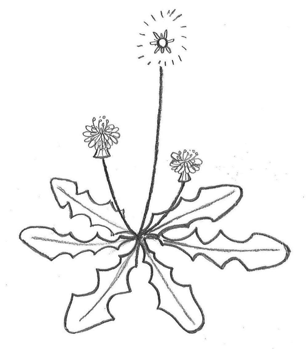 medium resolution of 1145x1295 weeds poll awkward botany